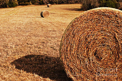 Hay In The Field Art Print by Tamyra Ayles