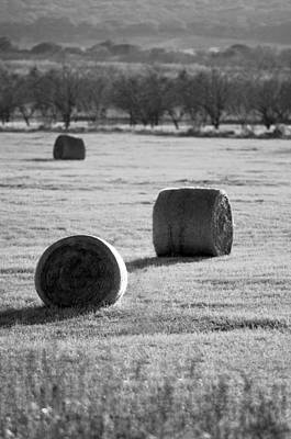 Photograph - Hay Is For Horses by Jill Reger