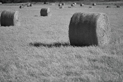 Photograph - Hay Is For Horses by Jonathan Davison