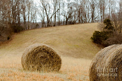 Hay On The Hills L Print by Victoria Lawrence