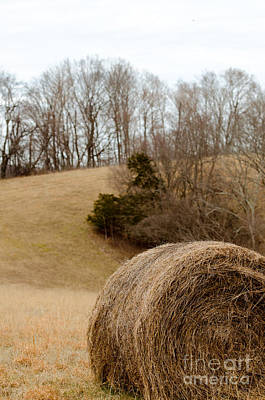 Hay On The Hills Ll Print by Victoria Lawrence