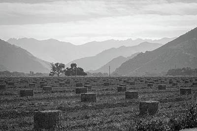 Photograph - Hay by Roland Peachie