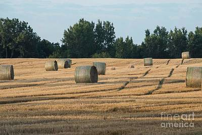 Photograph - Hay Rolling by David Bearden