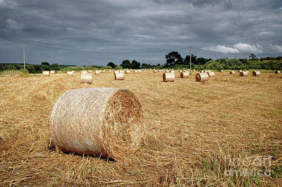 Spring Scenery Photograph - Hay Rolls by Carlos Caetano
