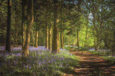 Bluebells Wall Art - Photograph - Hay Wood Bluebells 3 by Chris Fletcher