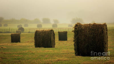 Photograph - Hay-z Autumn Morn by Doug Sturgess