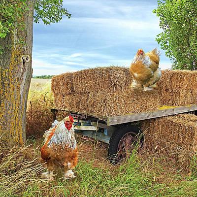 Hayride Photograph - Hayride Chickens by Gill Billington