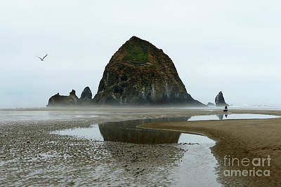 Photograph - Haystack Rock Reflection by Catherine Sherman