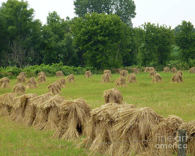 Photograph - Haystacks by PJ Boylan