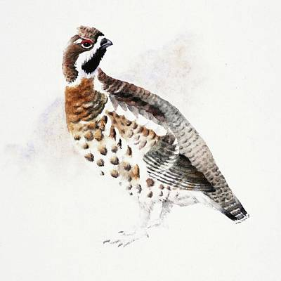 Painting - Hazel Grouse by Attila Meszlenyi