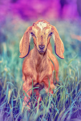 Goat Photograph - Hazel by TC Morgan