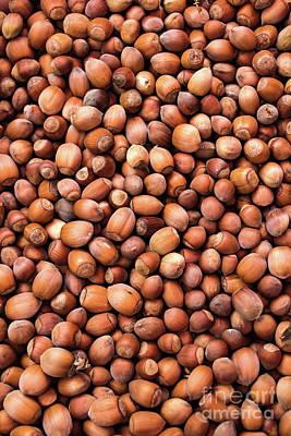 Nuts Mixed Media - Hazelnuts by Svetlana Sewell