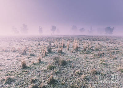 Photograph - Hazy Australian Winter Scene by Jorgo Photography - Wall Art Gallery