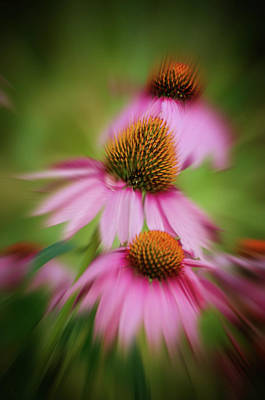 Photograph - Hazy Coneflowers by Susan McMenamin