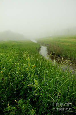 Photograph - Hazy Morning by Sandy Adams