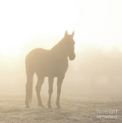 Photograph - Hazy Sunrise by Sari ONeal