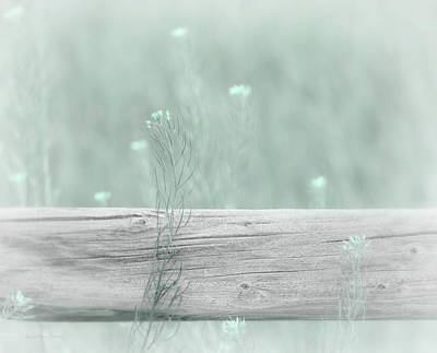 Photograph - Hazy Teal Wildflowers by Jennie Marie Schell
