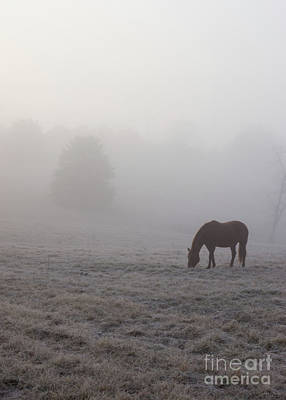 Photograph - Hazzy Grazing by Jennifer White