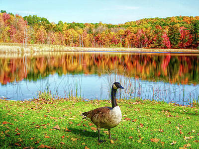 Photograph - Hdr Autumn Pond Goose by Aimee L Maher Photography and Art Visit ALMGallerydotcom