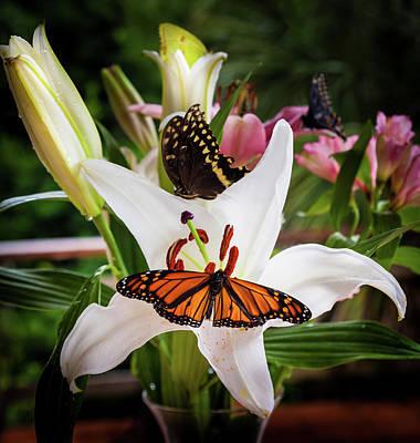 Art Print featuring the photograph He Still Gives Me Butterflies by Karen Wiles