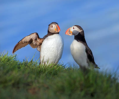 Puffin Photograph - He Went That Way by Betsy Knapp