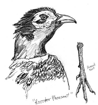 Drawing - Head And Foot Of A Chinese Ringneck Rooster Pheasant by Kevin Callahan