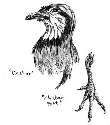 Drawing - Head And Foot Of A Chukar by Kevin Callahan