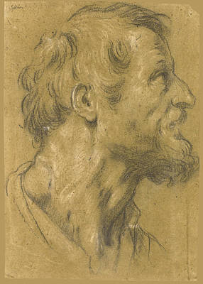 Rights Of Man Drawing - Head Of A Bearded Man Facing Right by Attributed to Francesco Rustici