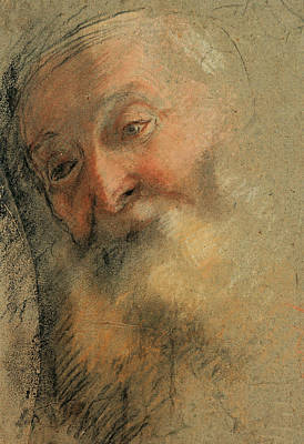 Drawing - Head Of An Old Bearded Man by Federico Barocci