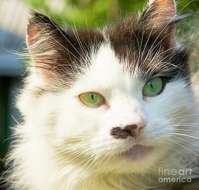 Photograph - Head Of Cat by Irina Afonskaya