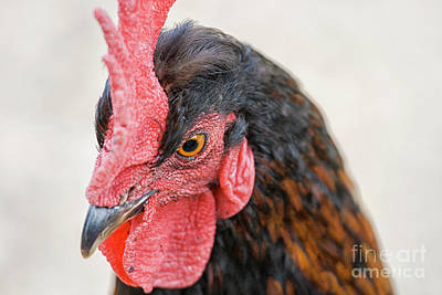 Photograph - Head Of Rooster In Close Up by Patricia Hofmeester