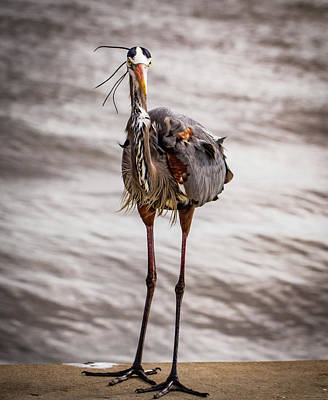 Photograph - Head On To A Heron by Jean Noren