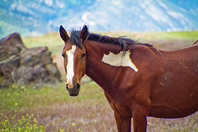 Photograph - Head Shot Of A Wild Paint Horse by Waterdancer