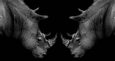 African Horned Animal Photograph - Head To Head by Martin Newman