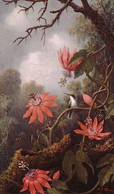 Passionflower Digital Art - Heade Martin Johnson Hummingbird And Passionflowers by Martin Johnson Heade