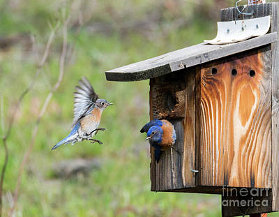 Birdhouse Photograph - Heading Home by Mike Dawson
