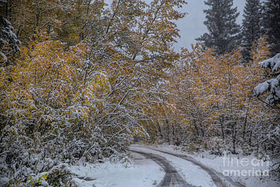 Photograph - Heading To Fall River Road by Lynn Sprowl