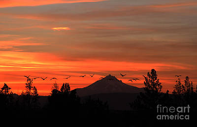 Photograph - Heading To Roost by Gary Wing