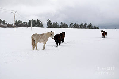 Photograph - Heading To The Barn by Anjanette Douglas