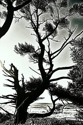 Digital Art - Headland Trees by Sheila Ping