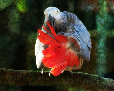 Photograph - Heads Or Tails by Kathy M Krause
