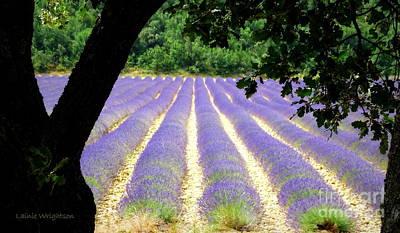 Healing Fields Of Lavender Art Print