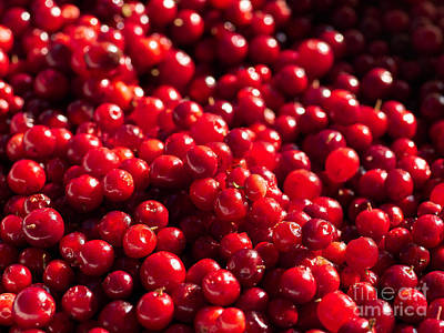 Photograph - Healthy Pile Of Lingonberries by Ismo Raisanen