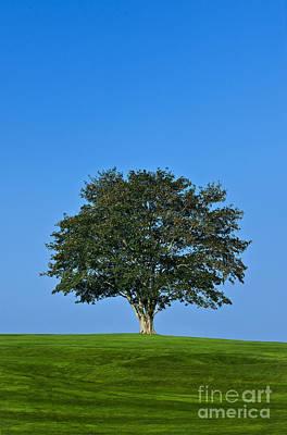 Healthy Tree Print by John Greim