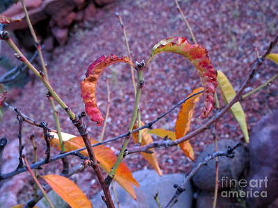 Photograph - Heart Autumn Leaves Sedona by Marlene Rose Besso