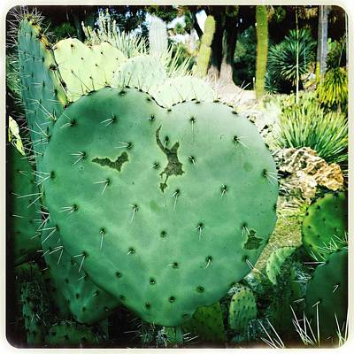 Photograph - Heart Cactus by Anne Thurston