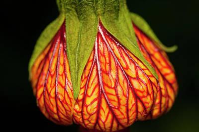 Heart Flower Original by Arthur Bohlmann