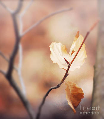 Photograph - Heart In The Forest by Kerri Farley