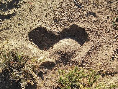 Photograph - Heart In The Sand by Deborah Moen