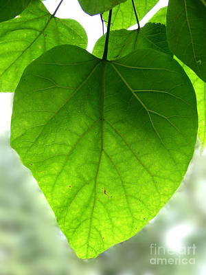 Photograph - Heart Leaf Photograph by Kristen Fox